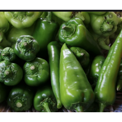 PEPPERS 0,550 Kg approx FRESH VEGETABLES ECO