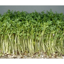 CRESS Lepidium sativum SEEDS
